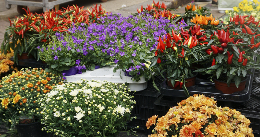 Flower selections