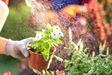 Flower Planting and Supplies